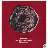 Fossilien aus dem Rheinischen Mitteldevon